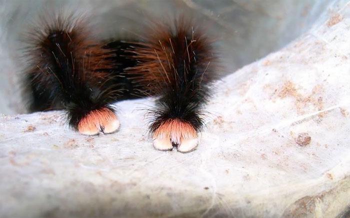 Örümceklere Karşı Bakış Açınızı Tamamen Değiştirecek 19 Minik Ponçik Pati